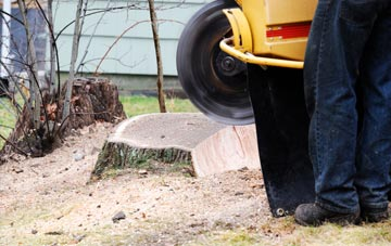 rated Brampton Street tree stump removal companies