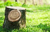 Brampton Street tree stump removal services
