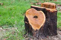 free Brampton Street tree stump removal quotes